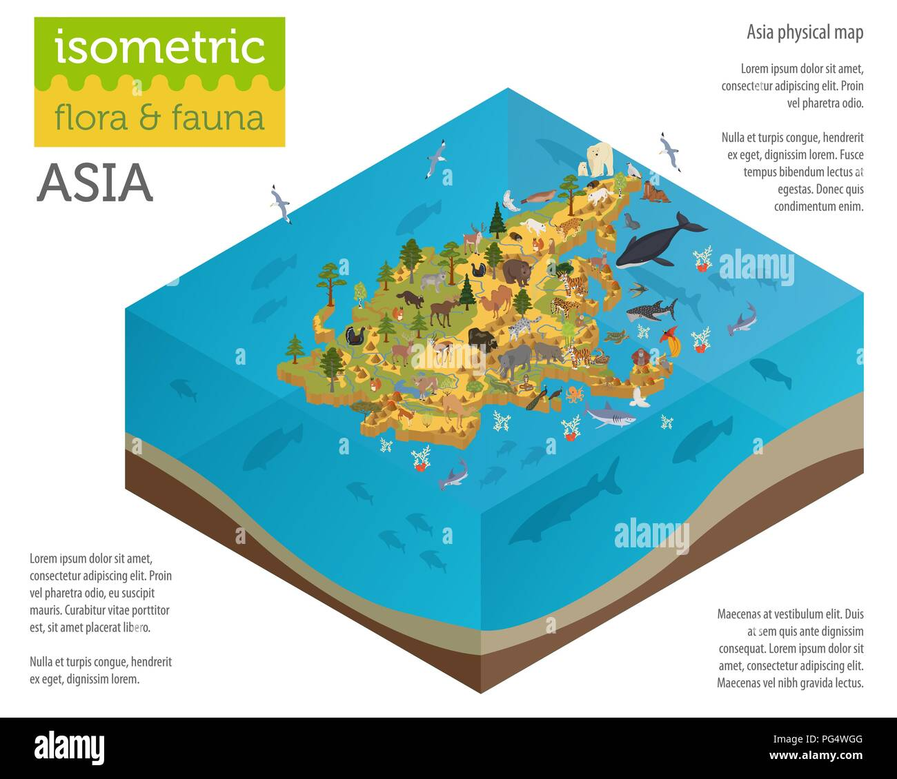 Isometric 3d Asian flora and fauna map constructor elements. Animals, birds and sea life isolated on white big set. Build your own geography infograph - Stock Image