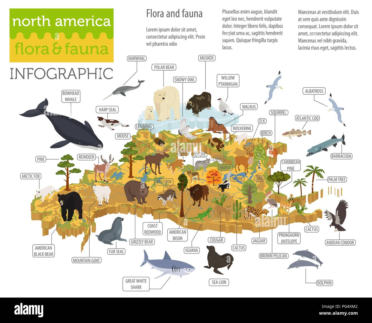 Isometric 3d North America flora and fauna map elements. Animals, birds and sea life. Build your own geography infographics collection. Vector illustr - Stock Vector
