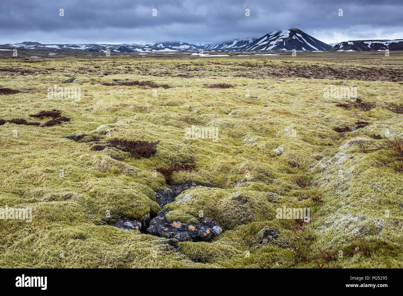 Iceland mossy field at cloudy day - Stock Image