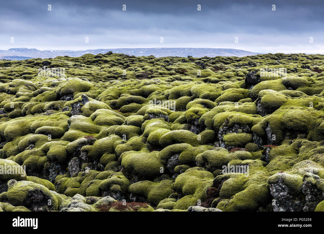 Iceland moss field at cloudy day - Stock Image