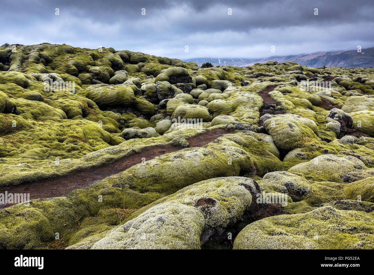 A path trough the mossy field at cloudy day in Iceland Stock Photo