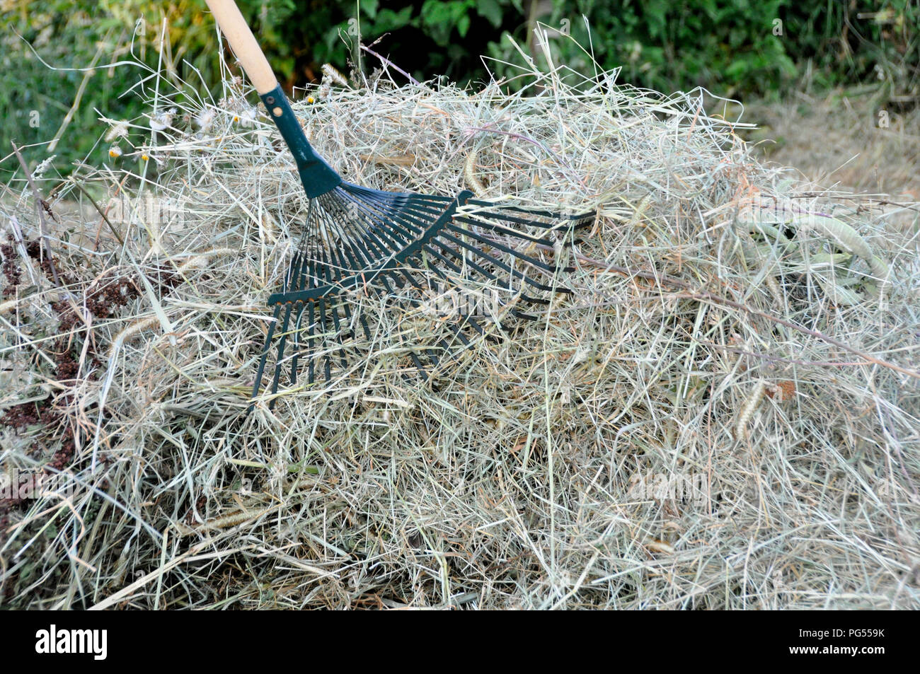 Backyard Cleaning cleaning of dry grassrakes on the backyard stock photo