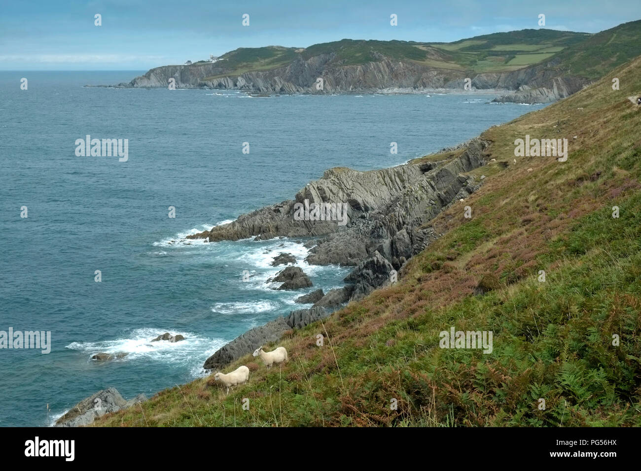 South West Coastal Path at Morte Point, Devonshire, UK - Stock Image