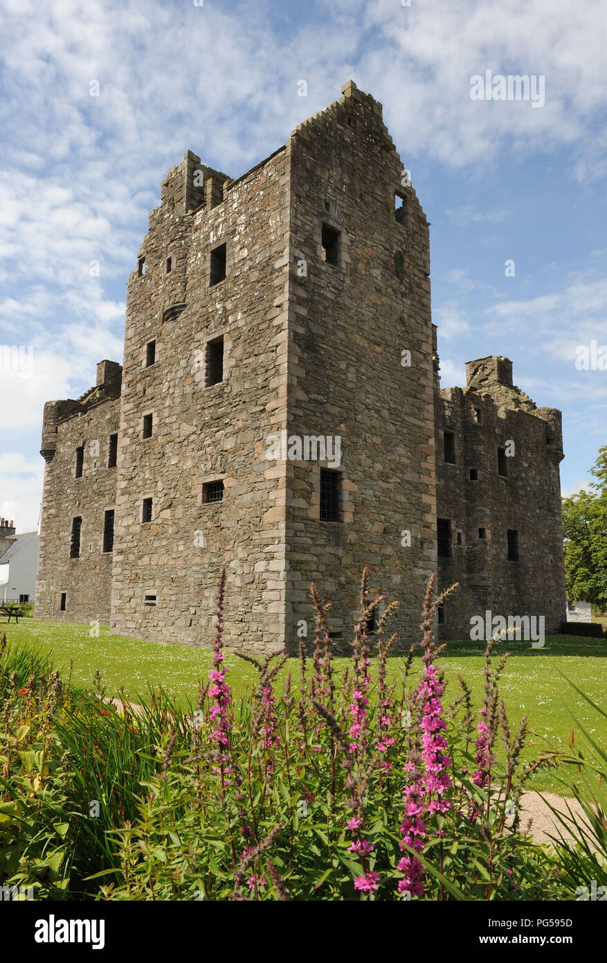 MacLlellan's Castle, Kirkcudbright, Dumfries and Galloway, SW Scotland. Photographed in summer with pink delphiniums in the foreground. Upright format - Stock Image