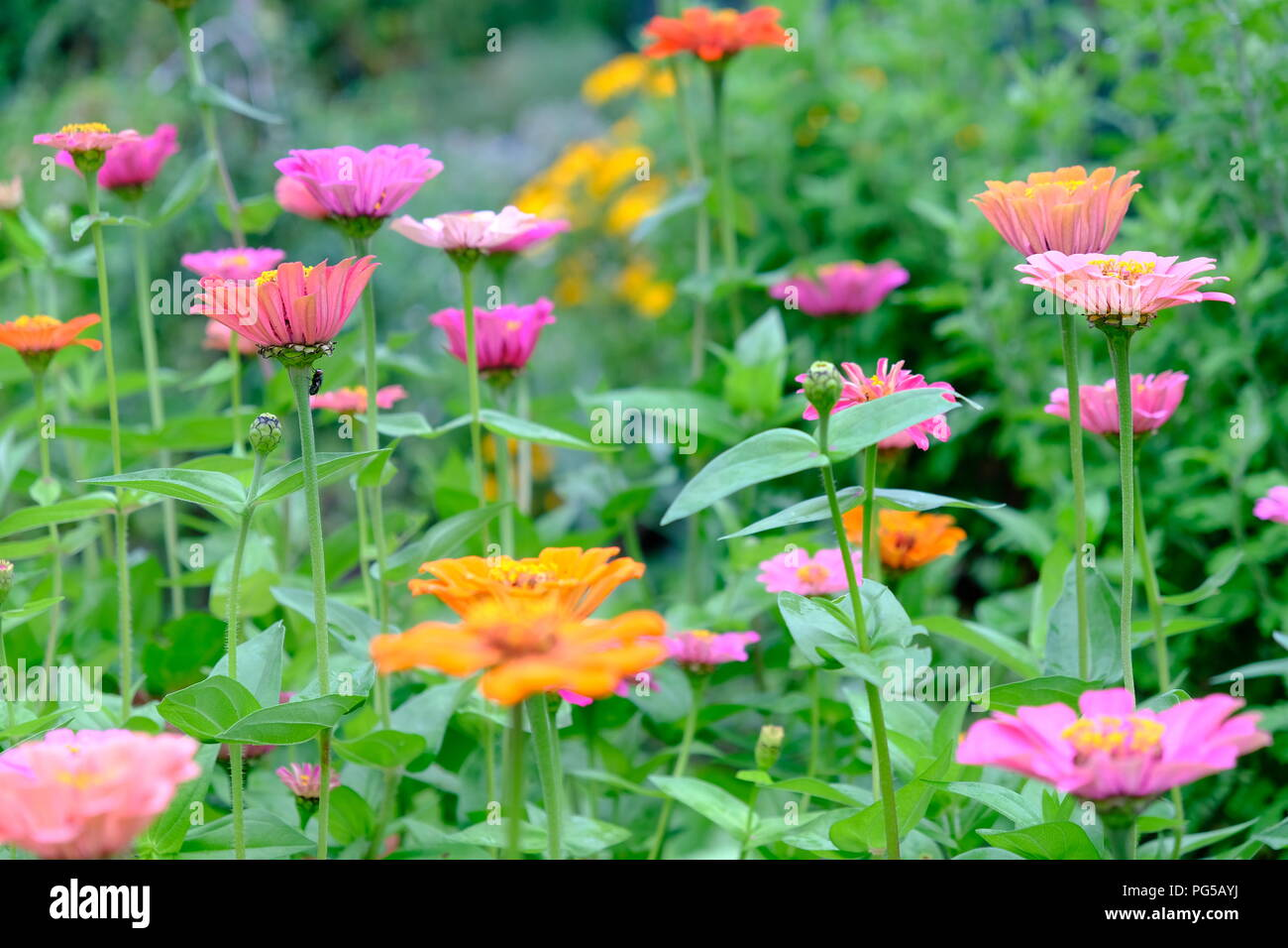 A Colorful Flower Scene Pink And Orange Flowers Surrounded By A