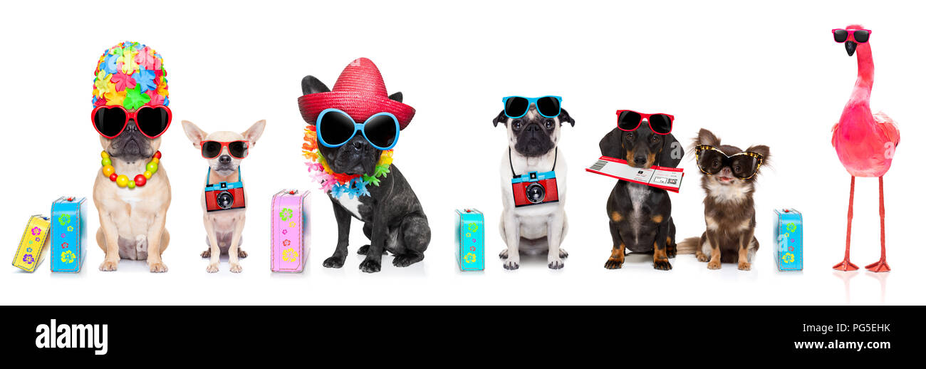 row or group of dogs ready  to go on summer vacation holidays, with hat, camera , ticket, bag and luggage - Stock Image