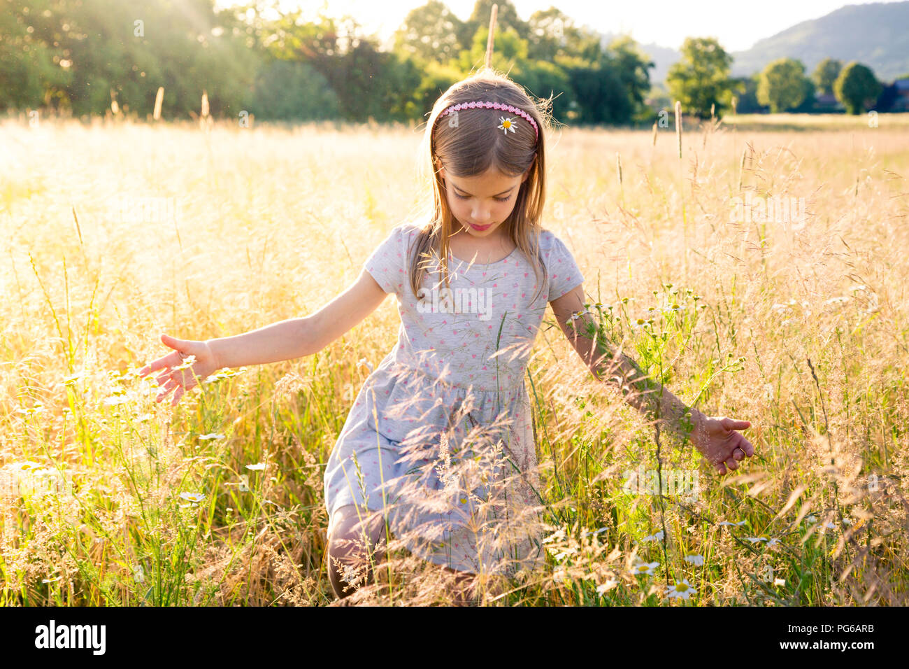 Young girl walking through field at summer evening - Stock Image