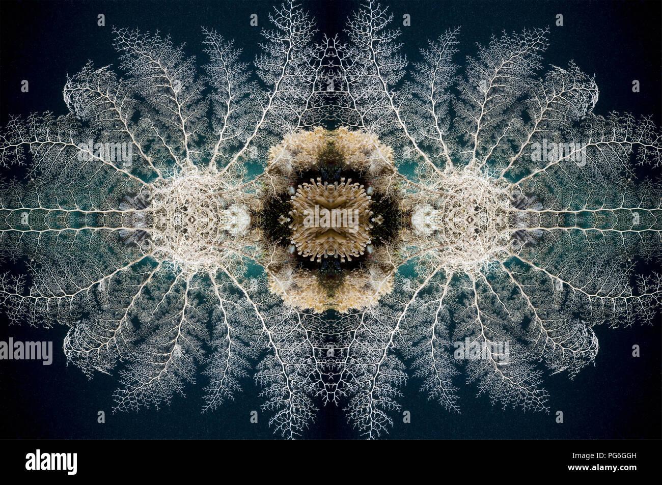 Featherstar (Crinoid sp.) on coral.  Moto Mount, Indonesia.  (Digital capture). - Stock Image