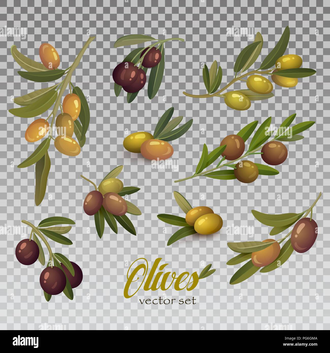 Isolated olive branch with ripe and raw berries with bleaks. Fruit food on tem logo or organic eat badge. May be used for herbal or vegan market banner, liquid ingredient or natural vitamin theme. - Stock Vector