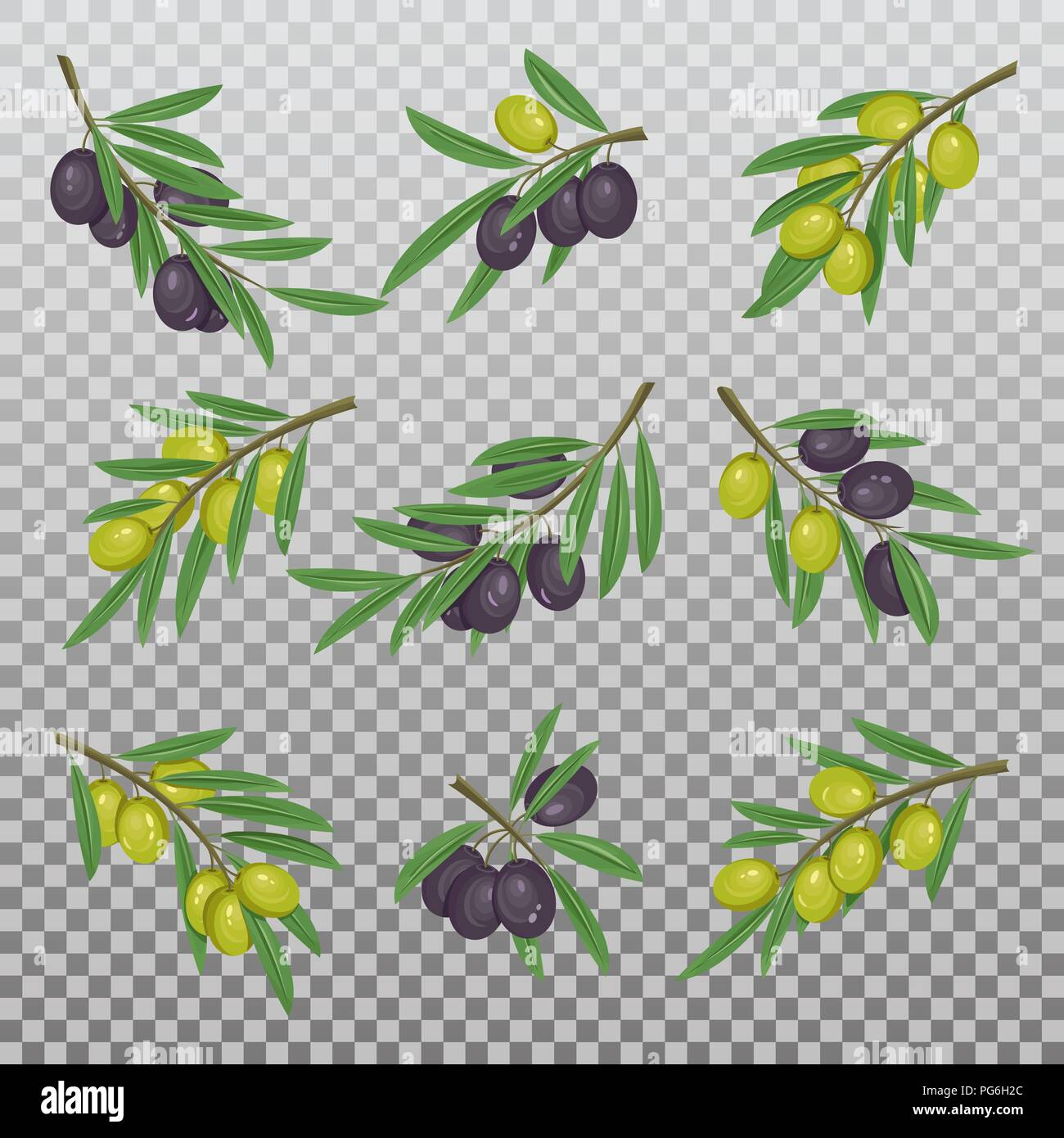 Set of isolated dark and light olive branches with berries and leaves for vegan or vegetarian nutrition, paint or food oil. Mediterranean healthy black and yellow berry foliage. Nature theme - Stock Vector