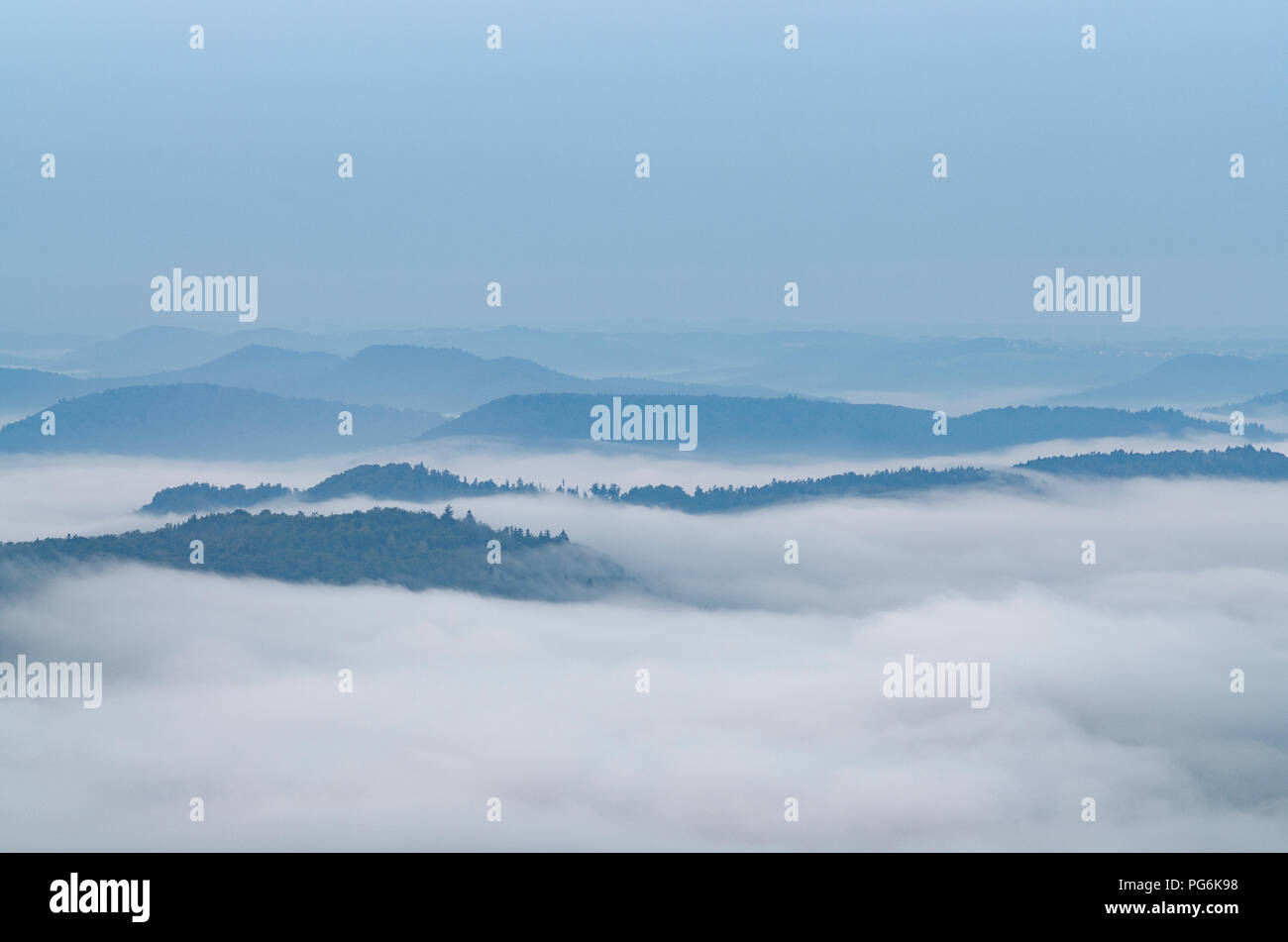 sunrise at forest with fog - Stock Image