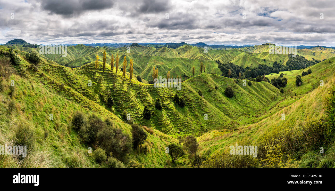 New Zealand, North Island, Taranaki, landscape seen from Forgotten World Highway - Stock Image