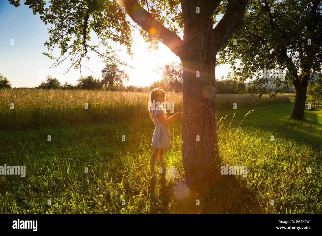 Young girl standing at tree against evening sun in summer - Stock Image
