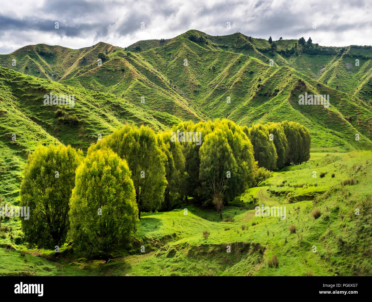 New Zealand, North Island, Manawatu-Wanganui Region, landscape - Stock Image