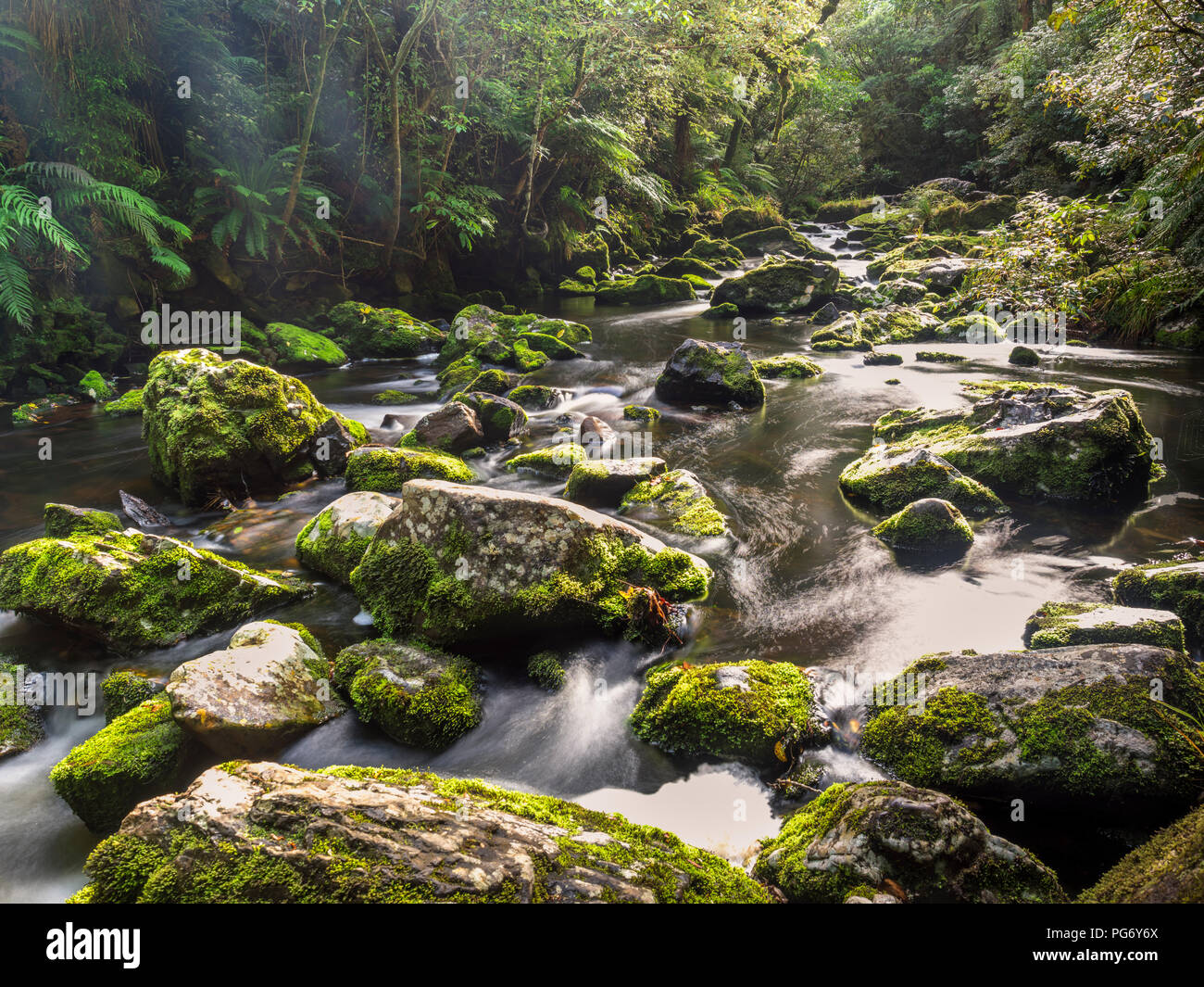 New Zealand, South Island, Tautuku River at Catlins Forest Park - Stock Image