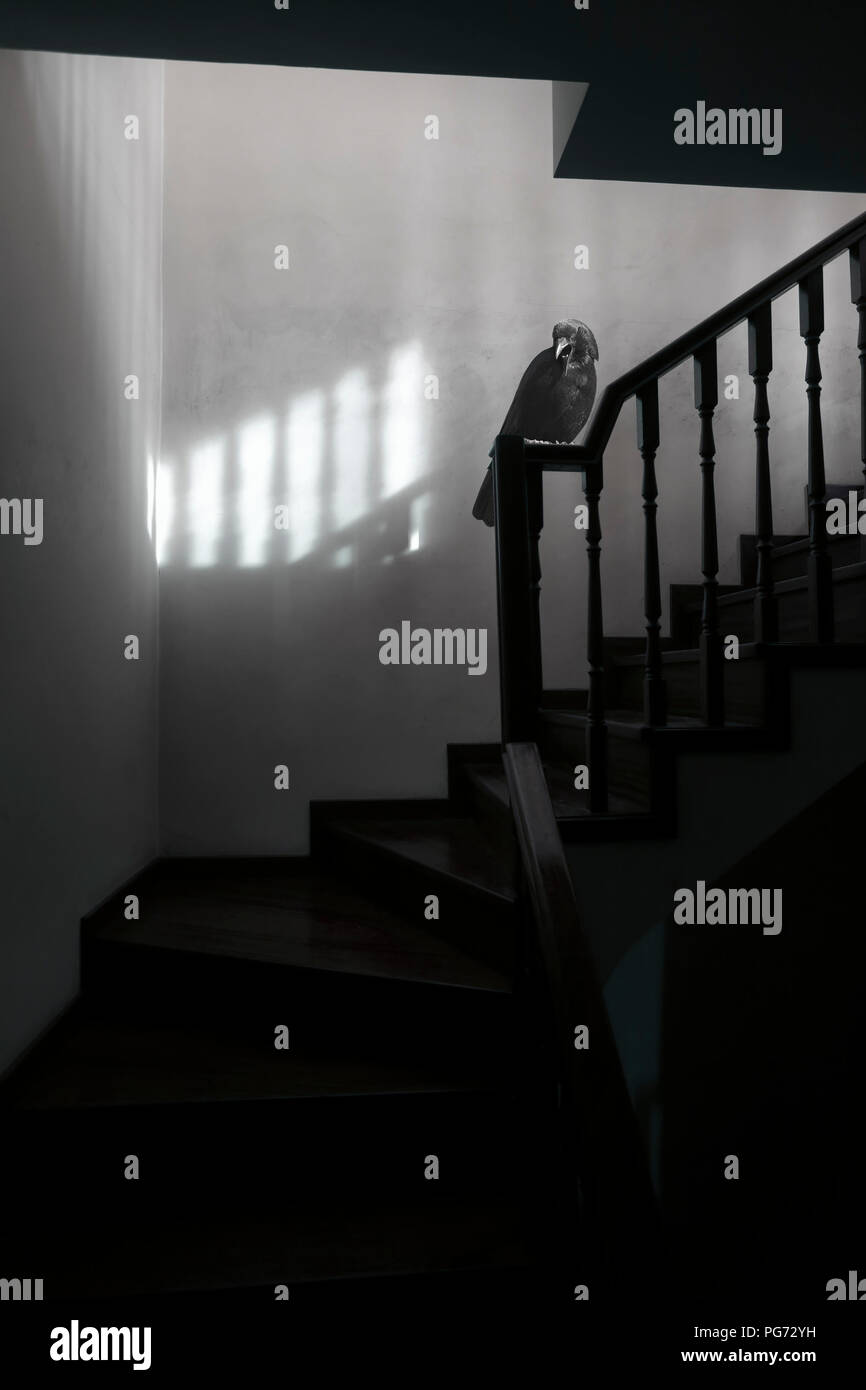 Frightening and surreal stairs to the attic with a crow on the handrail. - Stock Image