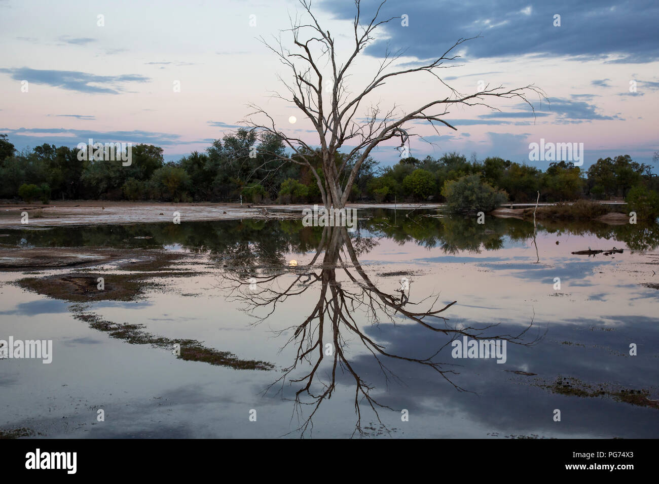Lake, dead tree and reflections at sunset in the Australian outback - Stock Image