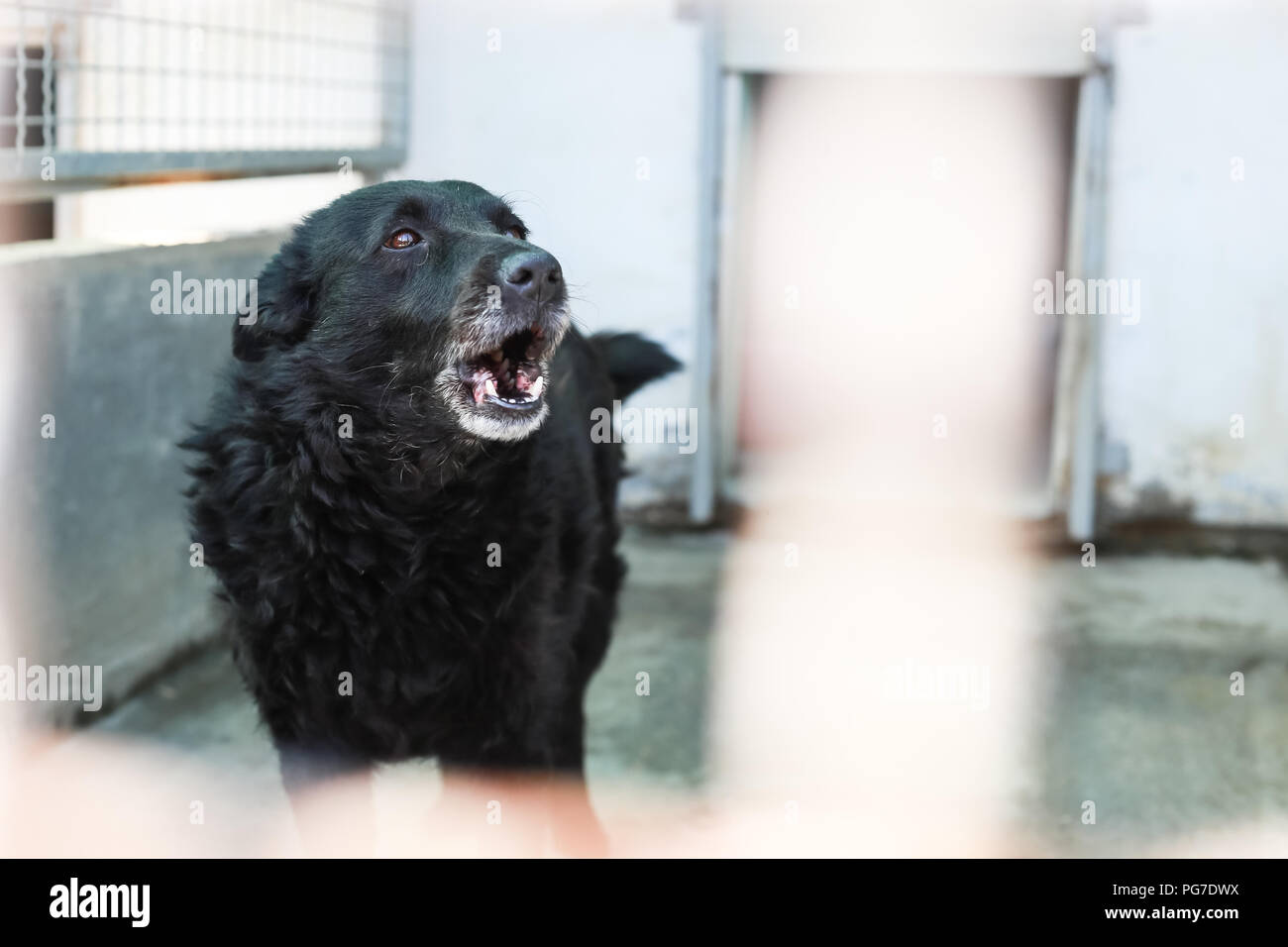 Dog in an animal shelter waiting for someone to adopt them. - Stock Image