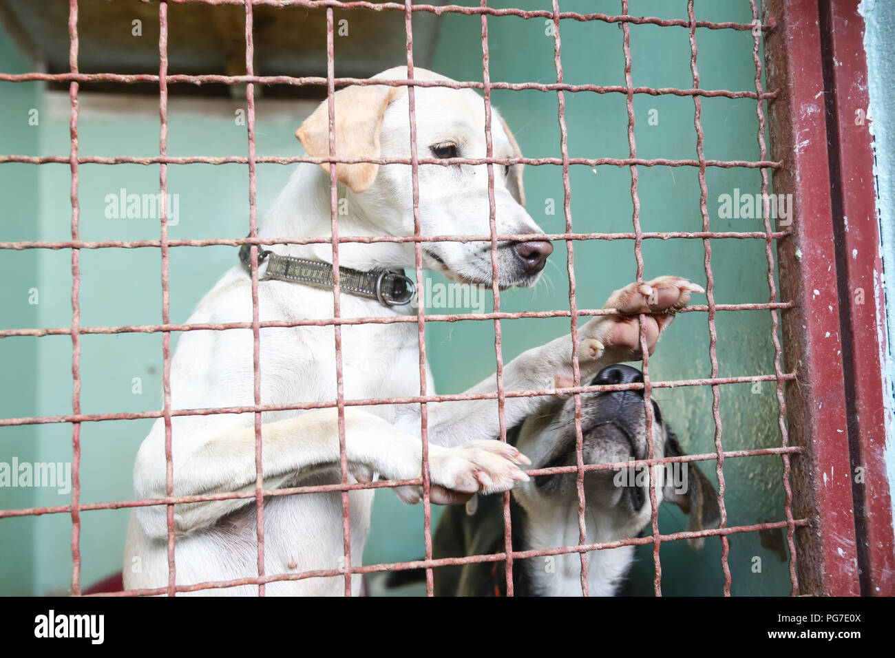 Metal Dog Cage Stock Photos & Metal Dog Cage Stock Images - Alamy