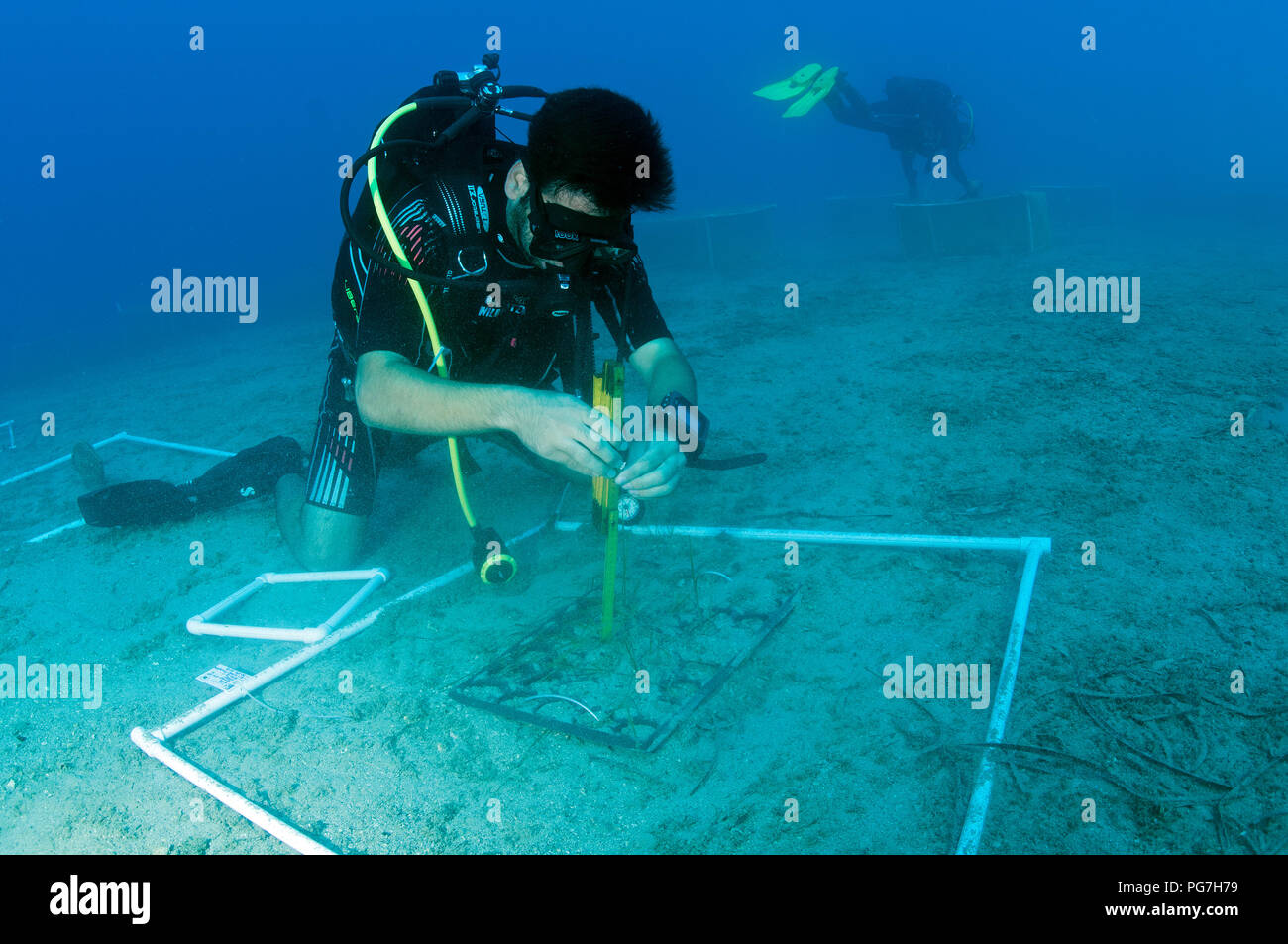Marine biologists experimenting on ecosystem restoration of seas grass Posidonia oceanica, against climate change and other anthropogenic  effects. - Stock Image