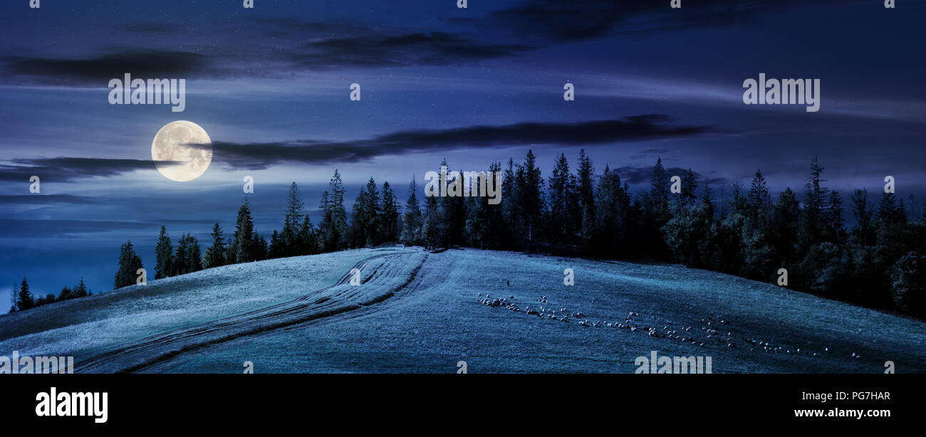road uphill in to the forest at night in full moon light. beautiful countryside panoramic scenery. herd of sheep grazing on the meadow. Stock Photo