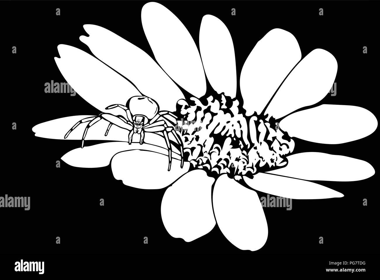 Black and white vector art of a Crab spider standing on flower head. Stock Vector