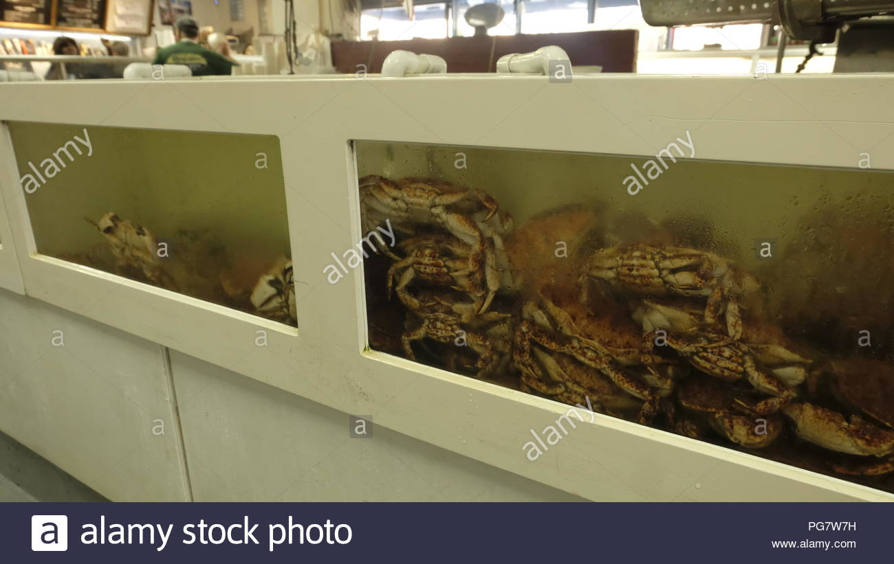 Prawns in a restaurant (alive) - Stock Image
