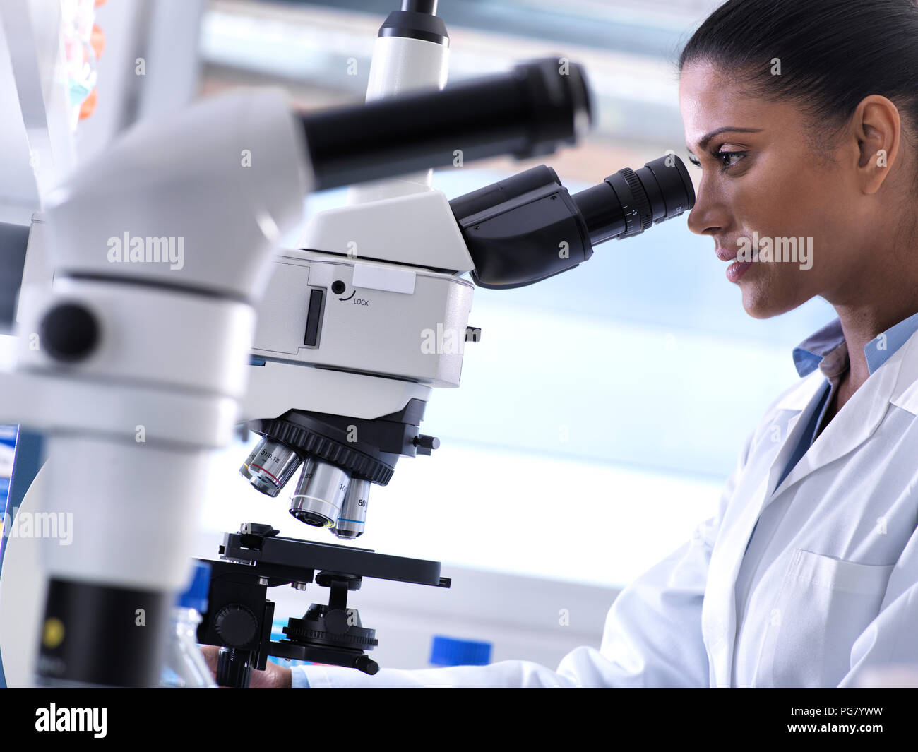 Biotechnology Research, female scientist examining a specimen under a microscope in the laboratory - Stock Image