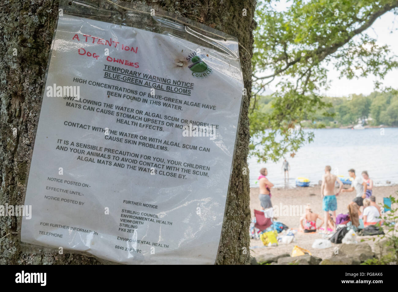 Blue Green Algae bloom warning - Milarrochy Bay near Balmaha, East Loch Lomond, Scotland - Stock Image