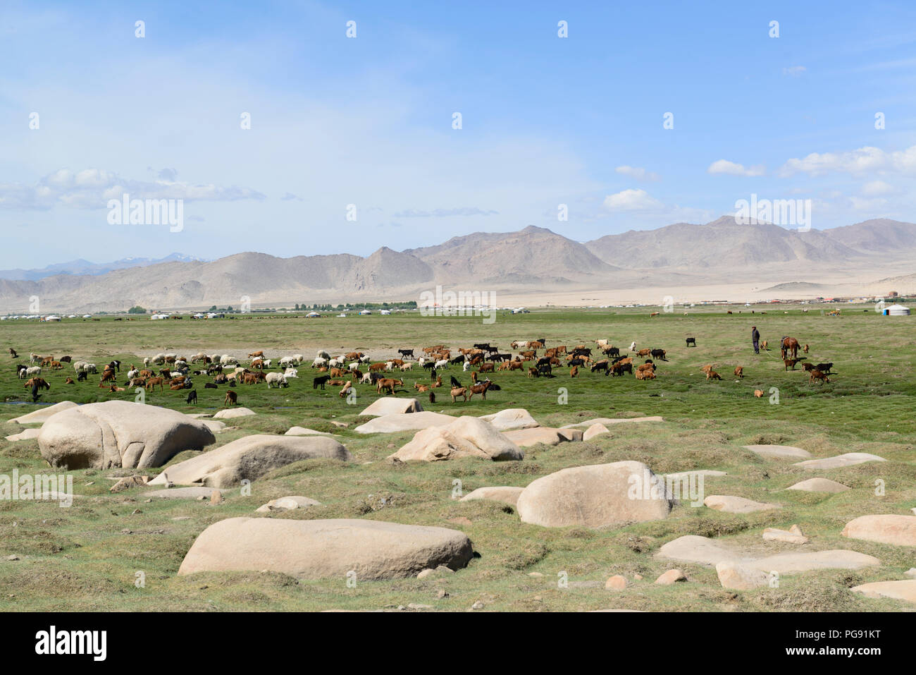 Nomads herding sheep and goats near their gers. - Stock Image