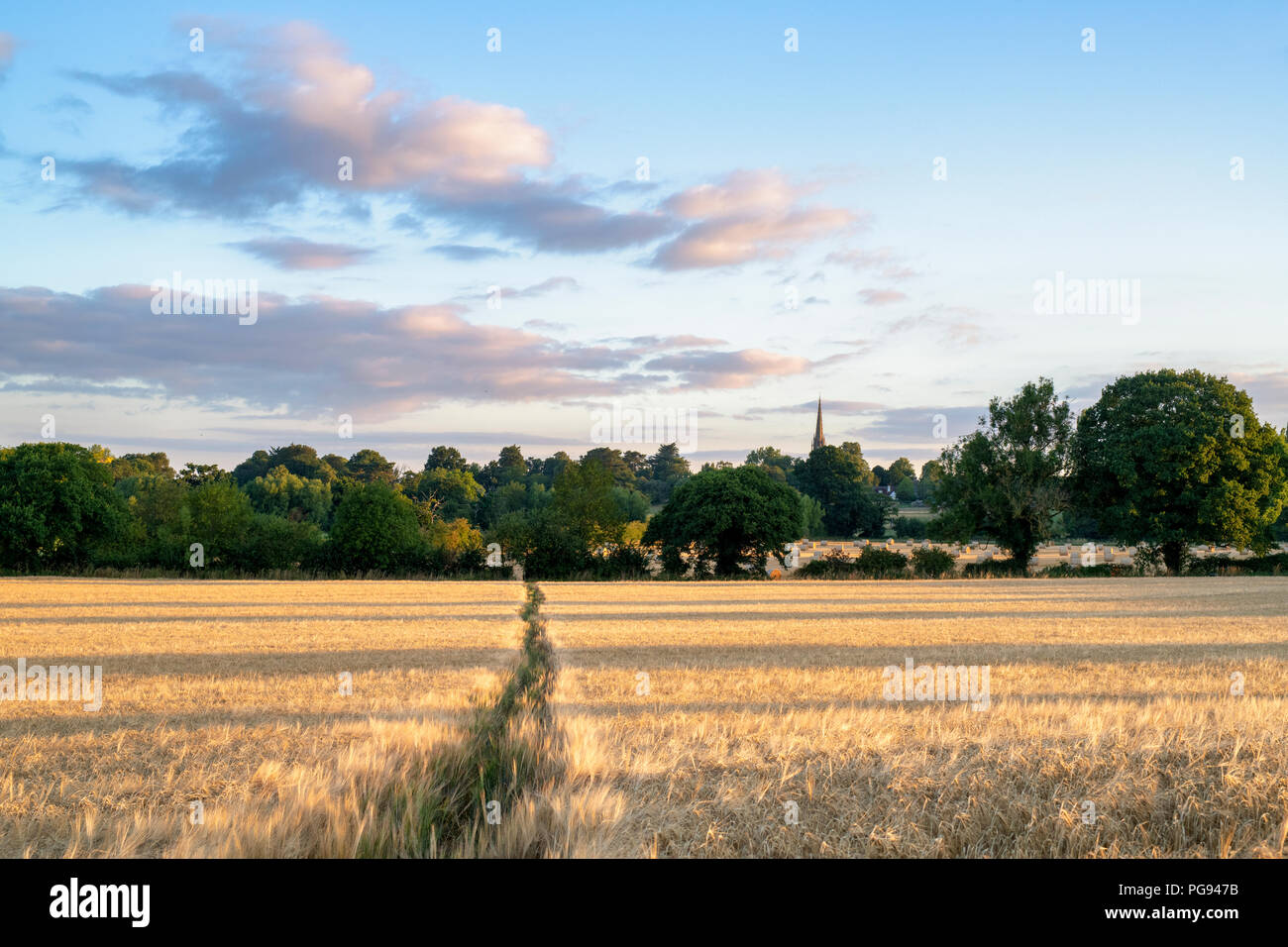 Hordeum vulgare. Morning light over a Barley field in summer. Kings Sutton, Northamptonshire, UK - Stock Image