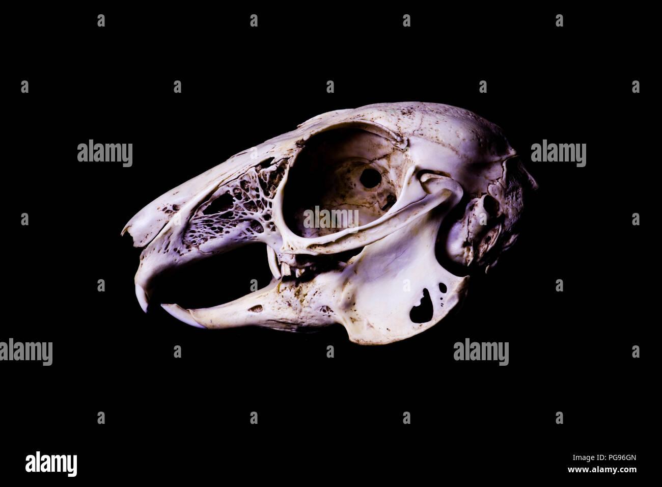 Rabbit Anatomy Stock Photos & Rabbit Anatomy Stock Images - Alamy