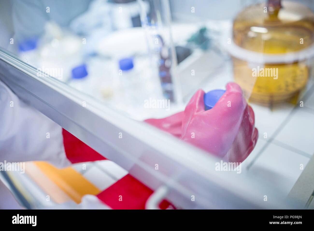 Lab technician using a laminar flow hood and thick gloves while working with dangerous chemicals. - Stock Image