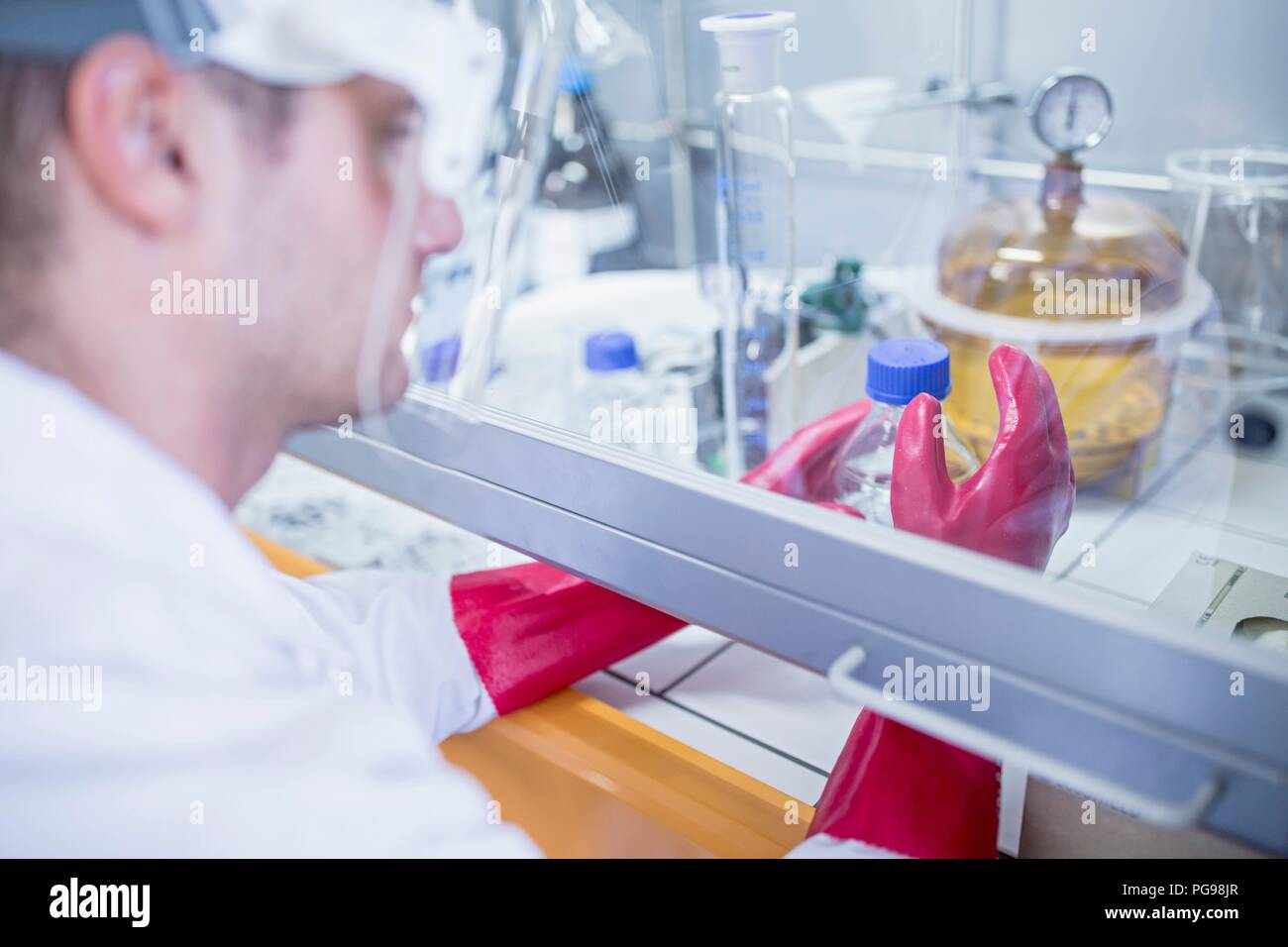 Lab technician using a laminar flow hood, thick gloves and a face shield while working with dangerous chemicals. - Stock Image