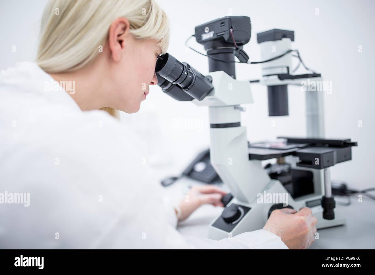 Scientist examining cultured cells under a microscope. - Stock Image