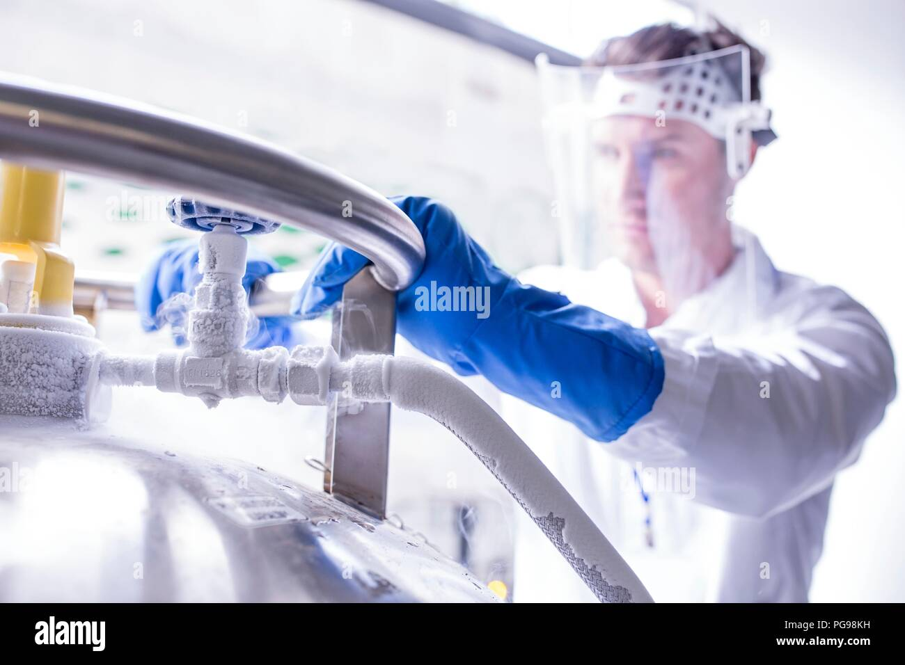 Technician storing stem cell samples in cryostorage. They have been frozen in liquid nitrogen to preserve them. Stem cells are a potential source of cells to repair damaged tissue in diseases such as Parkinson's and insulin-dependent diabetes. - Stock Image