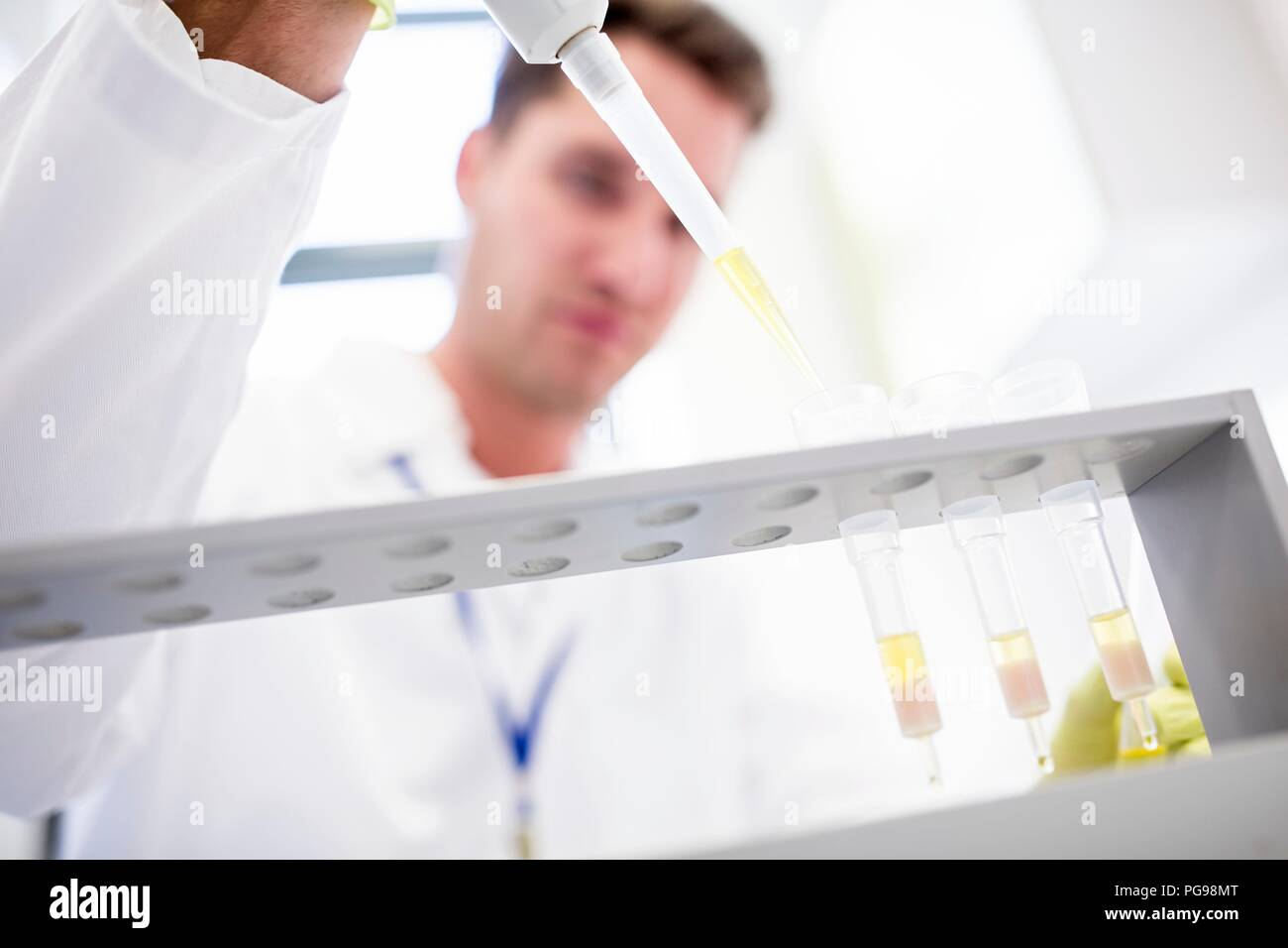 Technician pipetting samples into cartridges for solid phase extraction (SPE). SPE is used to separate biological compounds from a mixture for further analysis. - Stock Image