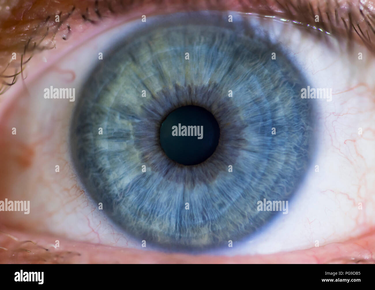 Male human eye macro of a man's blue eyes looking into the lens. - Stock Image
