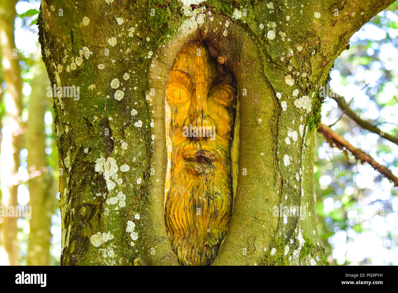 Old man face in a tree - Stock Image