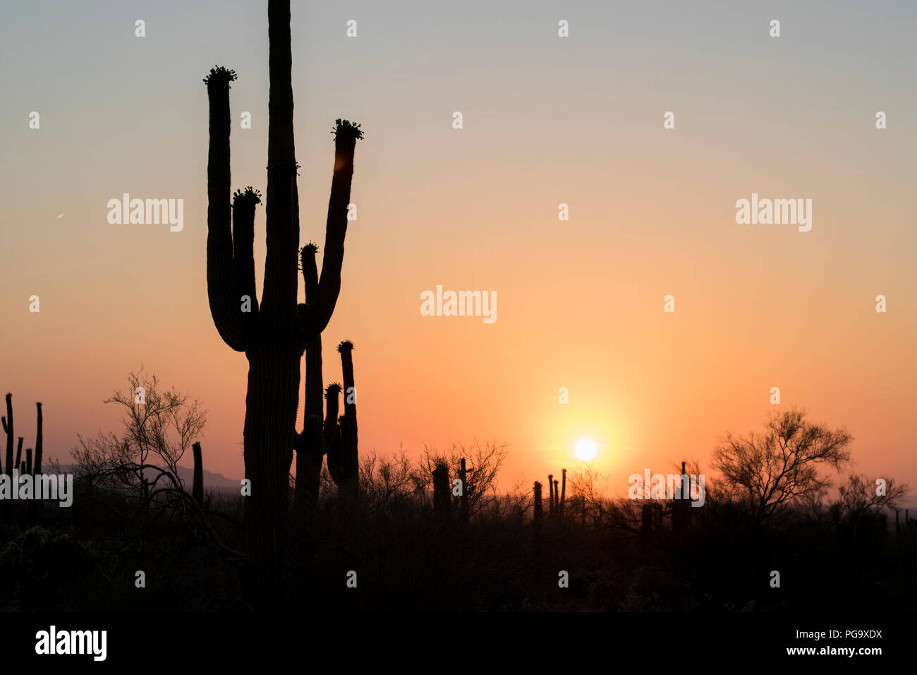 Desert Sunset in the barren Arizona Landscape with silhouette cactus. Silence and solace in the brutal and harsh desert heat. - Stock Image
