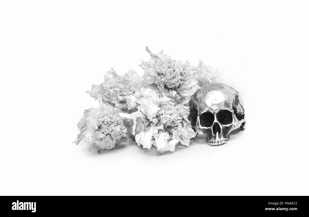 Silver scull ring with flowers, white background. - Stock Image