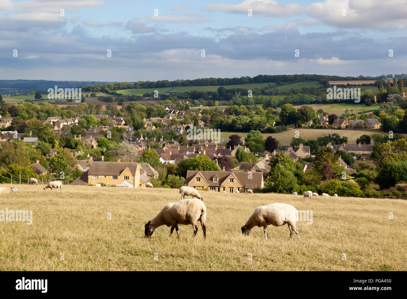 Sheep grazing summer grass above Cotswold town of Chipping Campden, Chipping Campden, Cotswolds, Gloucestershire, England, United Kingdom, Europe - Stock Image