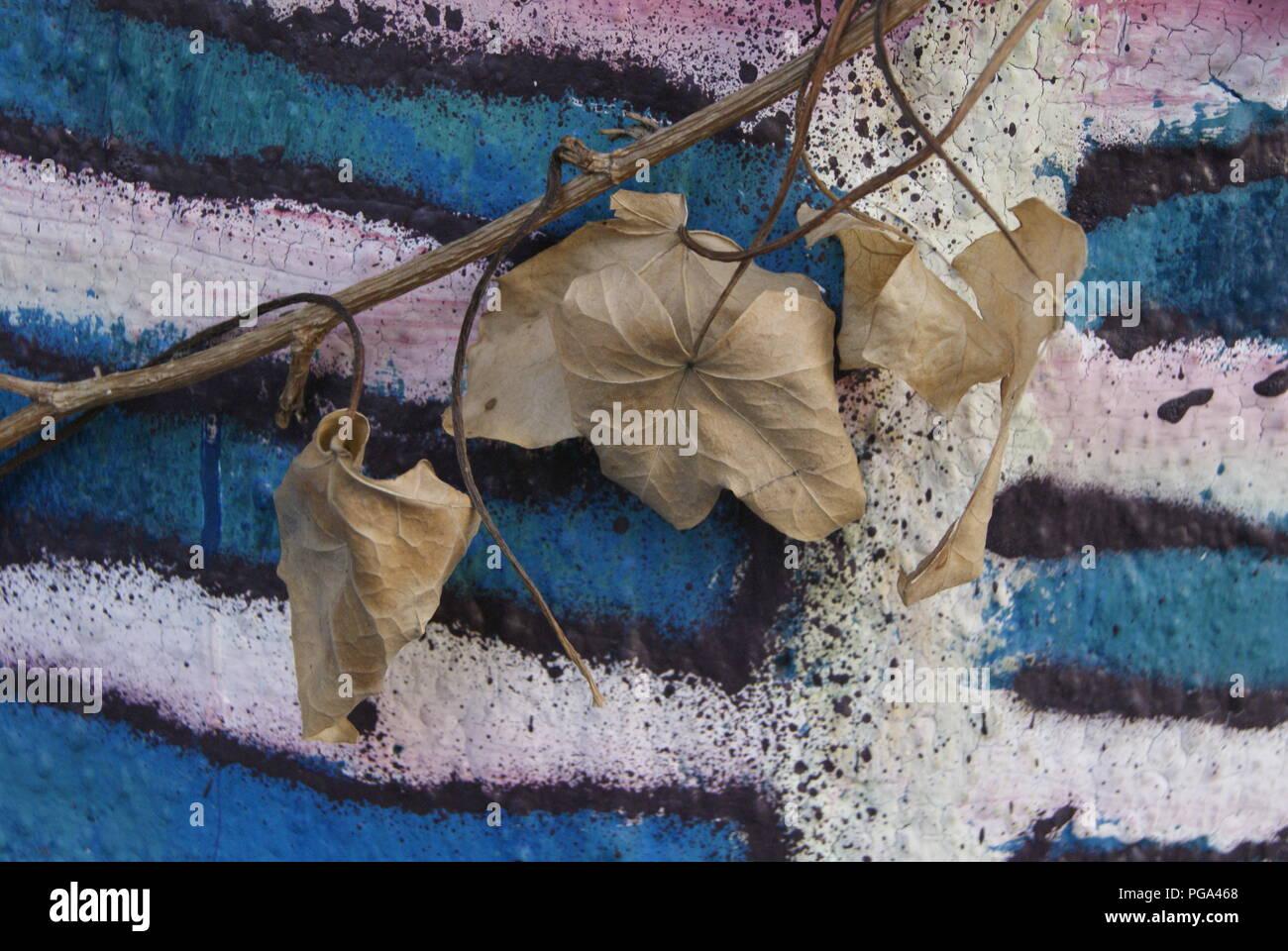 feuilles - Stock Image