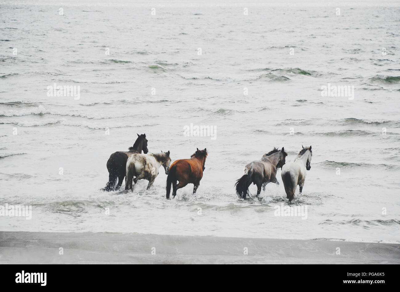 Majestic Horse Running High Resolution Stock Photography And Images Alamy