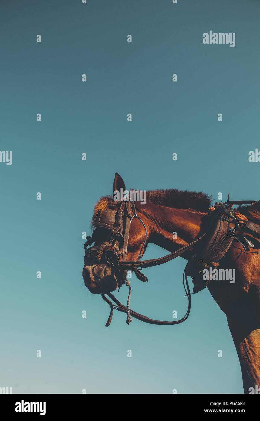 Workhorse; minimal composition with horse standing - Stock Image