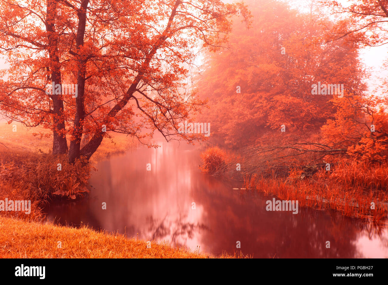 Fall colors on autumn foggy river. Alden trees on riverbank. Autumn misty morning. Autumn dawn scene - Stock Image