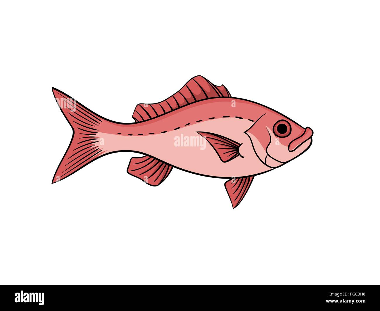 Red snapper fish illustration in vintage naturalistic style vector animal isolated on white Stock Vector
