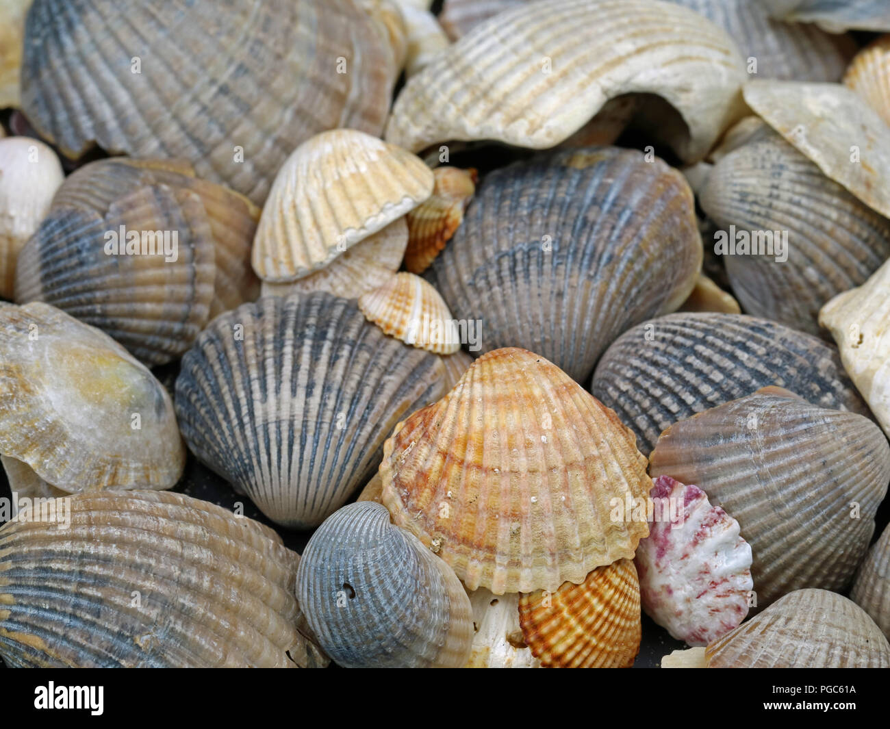 close up of different shellfish found on Mediterranean Sea Stock Photo