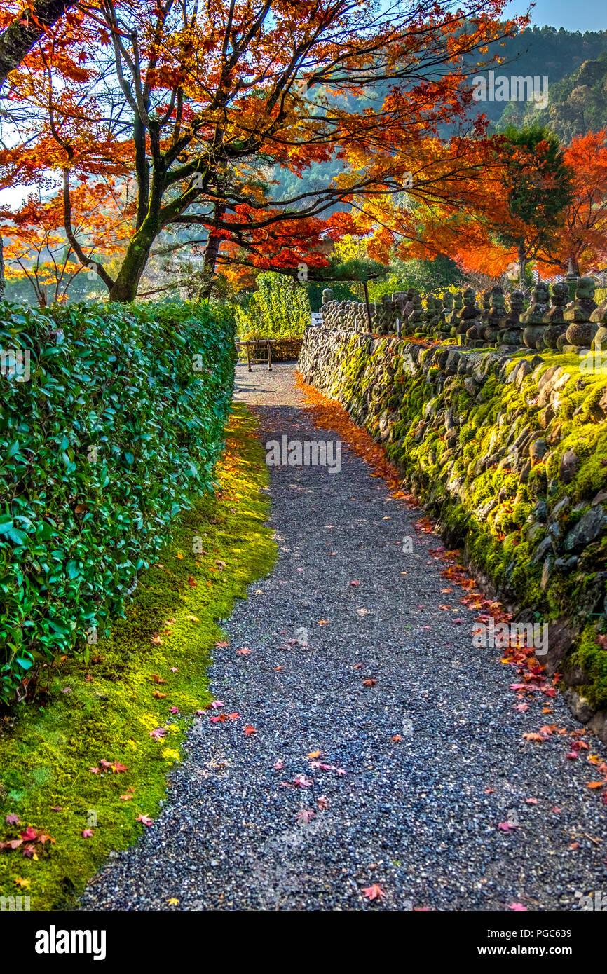 Beautiful Fall Autumn Landscape Around At Adashino Nenbutsu Ji
