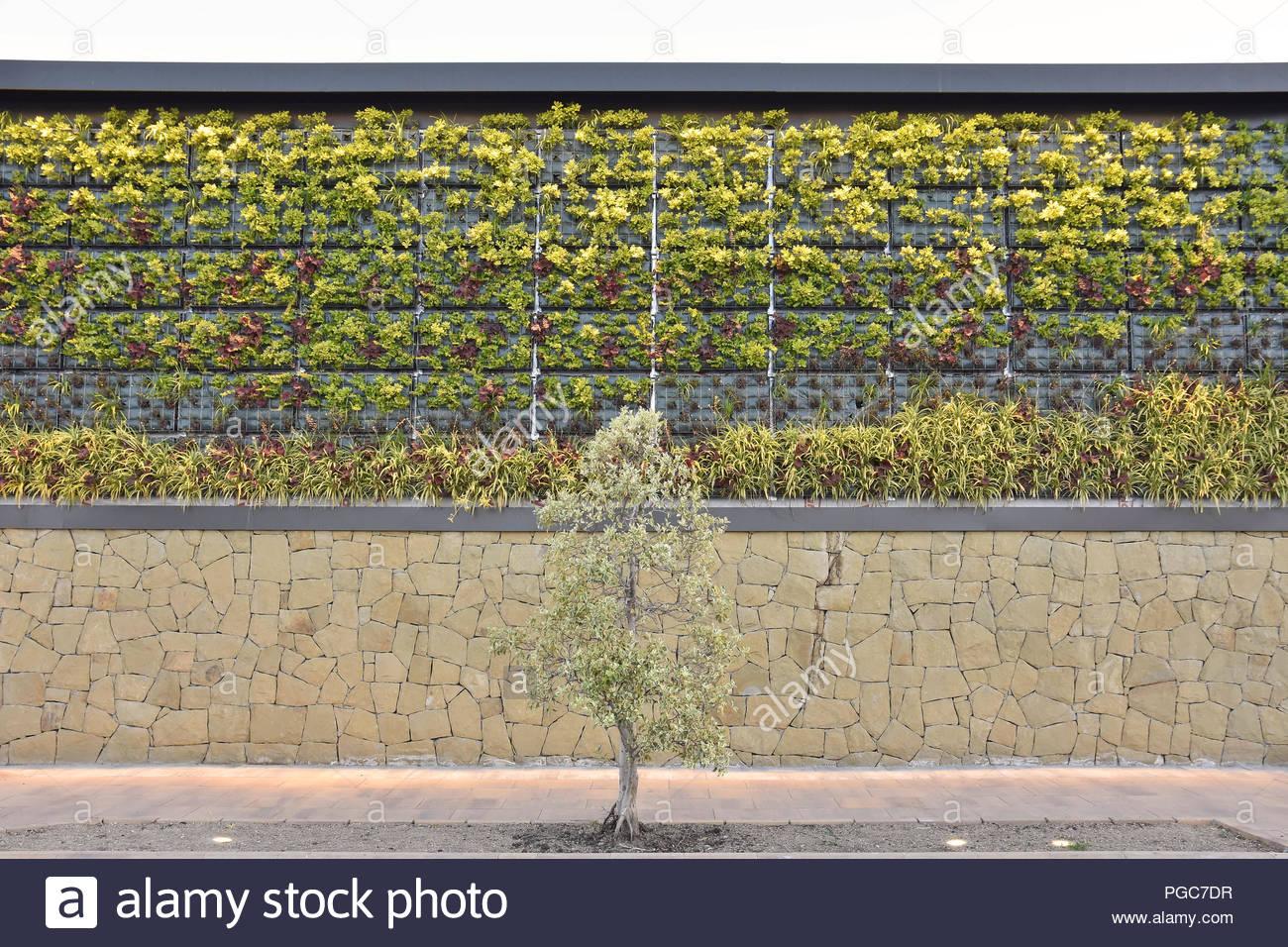 Green Wall Vertical Garden Facade With Plants In Malaga Southern